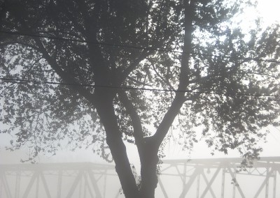 Early November 2013 Fog